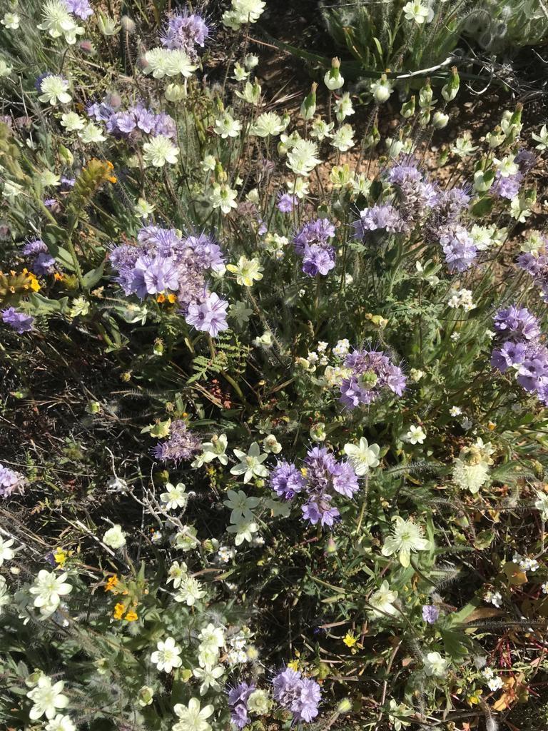 California Super Bloom - Antelope Valley California Poppy Reserve