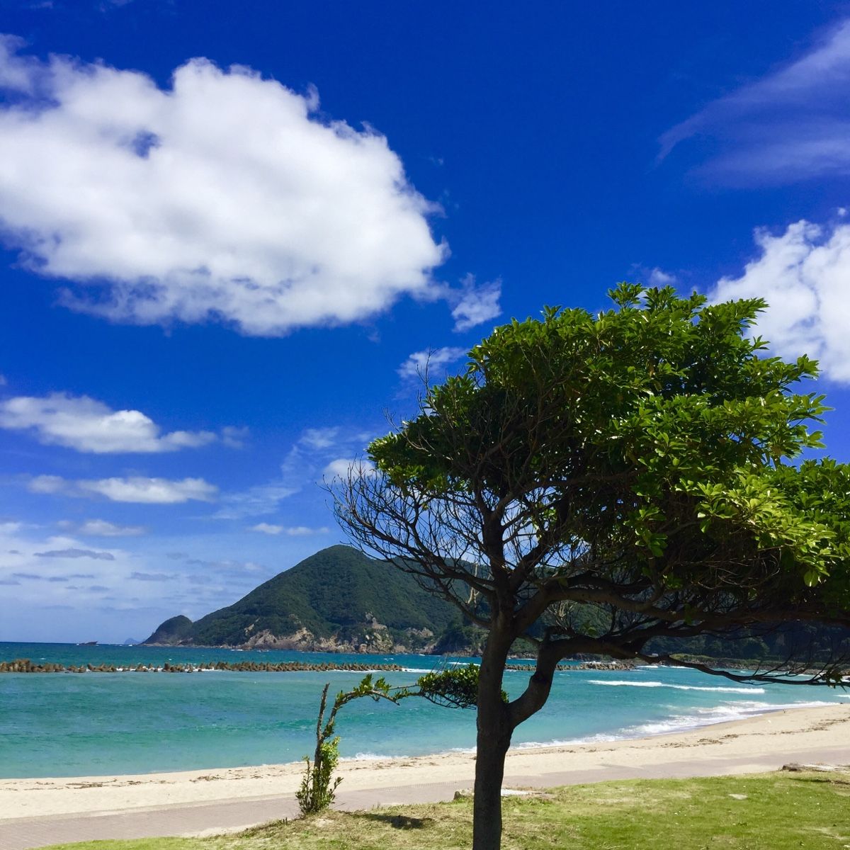 Takeno sandy beach and tree